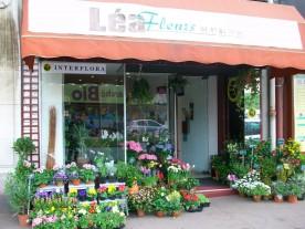recherche : - fleuriste, art floral, horticulteur à saint maur des