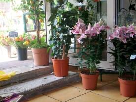 bambou fleuriste et paysagiste fleurs exotiques paysagiste d 39 int rieur meaux. Black Bedroom Furniture Sets. Home Design Ideas