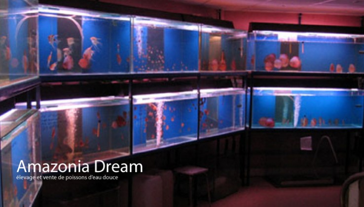 Amazonia Dream