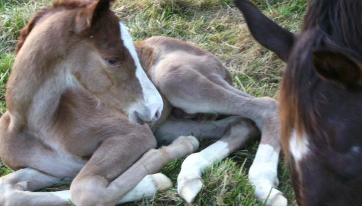 Photo n°3 Horses de Noirmont