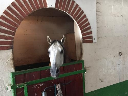 Pension chevaux poney Pré-Box